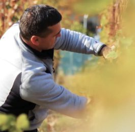 Закарпатський винороб розповів про секрети виробництва сонячного напою