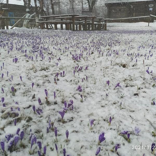 28 березня: закарпатське село засипало снігом