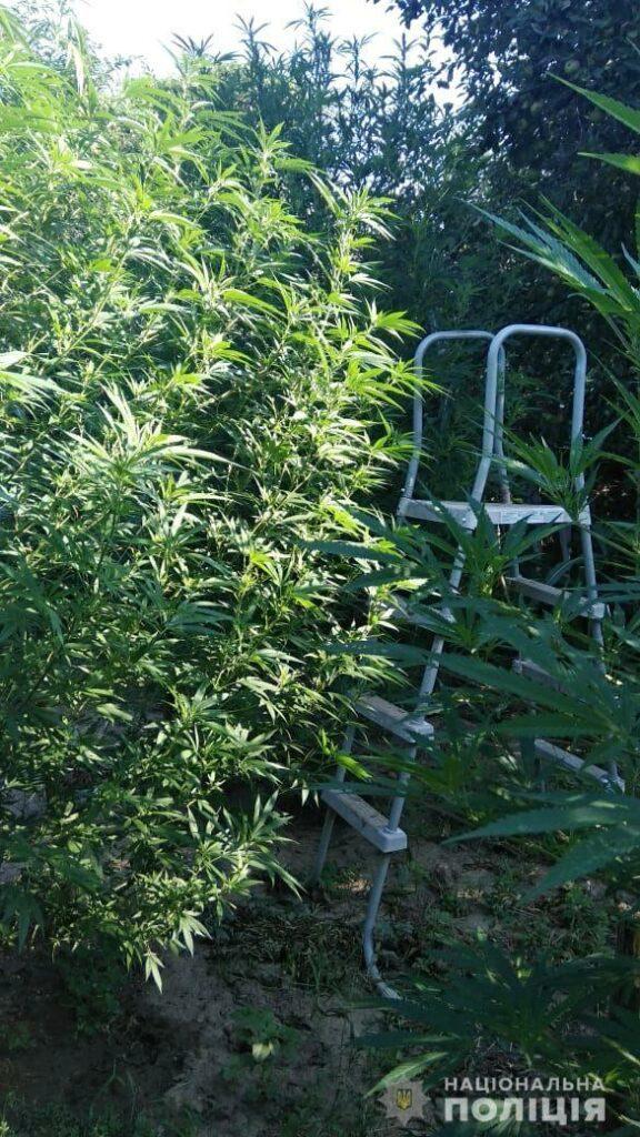 Мукачево, поліцейські, обіг наркотиків, наркоторговець, обшук, наркотики